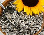 semente de girassol.jpg