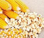 milho-pipoca-americano-sementes-para-mud