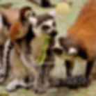 animal jp today.jpg