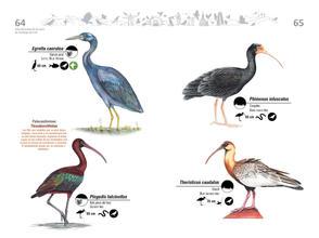 Libro de aves de Cali33.jpg