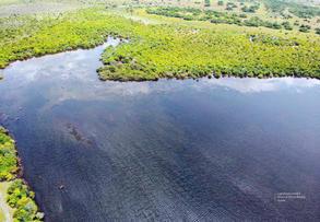 Aves acuaticas de Colombia final junio baja _Página_29.jpg