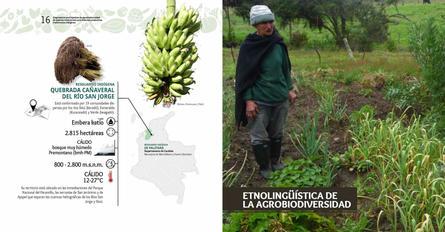 Diagnosticos Agrobiodiversidad pliegos_Página_09.jpg