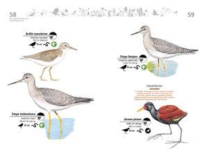 Libro de aves de Cali30.jpg
