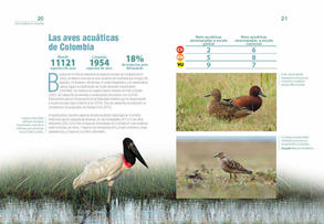 Aves acuaticas de Colombia final junio baja _Página_11.jpg