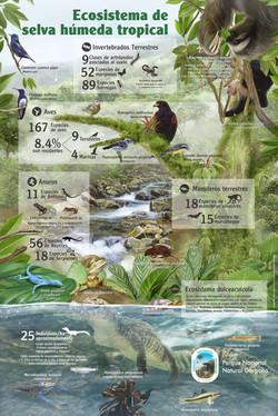 Fauna y Flora Gorgona