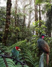 Cómo puedo yo contribuir a la conservación de las aves en Colombia_Página_19.jpg