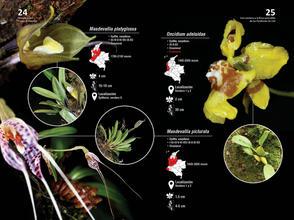Guia de orquideas del Danubio13.jpg