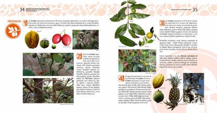 Diagnosticos Agrobiodiversidad pliegos_Página_18.jpg