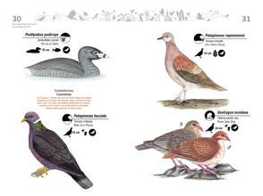 Libro de aves de Cali16.jpg