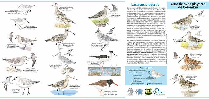 Plegable aves playeras tiro para la pagina web.jpg