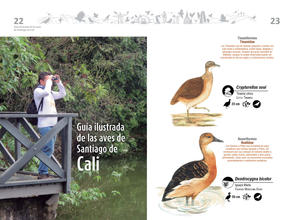 Libro de aves de Cali12.jpg