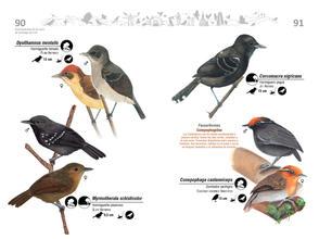 Libro de aves de Cali46.jpg