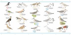 Plegable aves playeras retiro