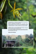 Guia de orquideas del Danubio23.jpg