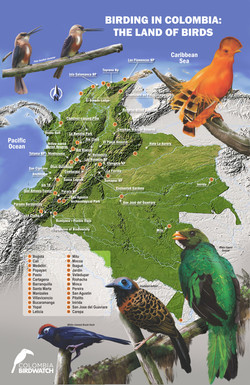 BIRDING IN COLOMBIA THE LAND OF BIRDS