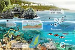 ECOSISTEMAS MATINOS DE GORGONA