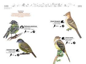 Libro de aves de Cali51.jpg