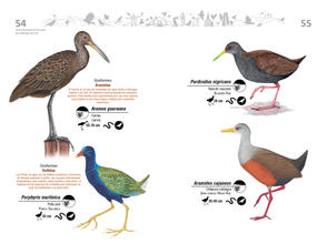 Libro de aves de Cali28.jpg