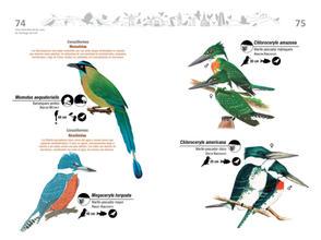 Libro de aves de Cali38.jpg