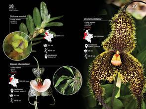 Guia de orquideas del Danubio10.jpg
