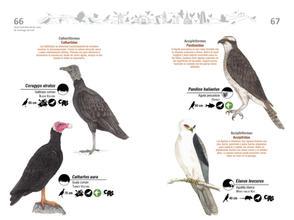 Libro de aves de Cali34.jpg