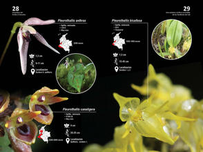 Guia de orquideas del Danubio15.jpg