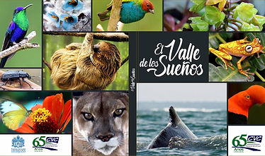AF CARATULA REVISTA EL VALLE DE LOS SUEÑOS WEB.jpg