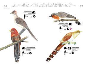 Libro de aves de Cali19.jpg