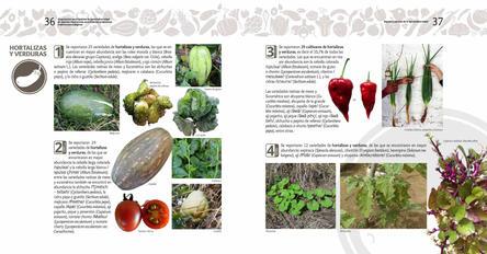 Diagnosticos Agrobiodiversidad pliegos_Página_19.jpg