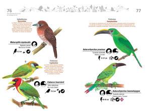 Libro de aves de Cali39.jpg