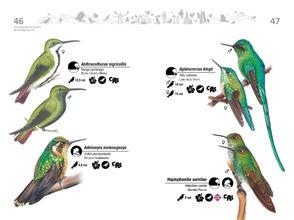 Libro de aves de Cali24.jpg