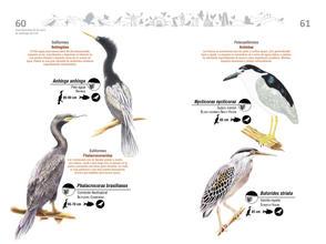Libro de aves de Cali31.jpg