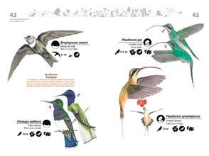Libro de aves de Cali22.jpg