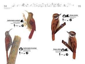 Libro de aves de Cali48.jpg