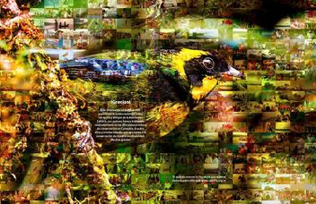 Cómo puedo yo contribuir a la conservación de las aves en Colombia_Página_18.jpg