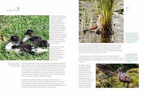 Aves acuaticas de Colombia final junio baja _Página_09.jpg