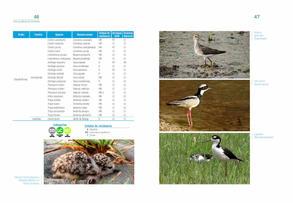 Aves acuaticas de Colombia final junio baja _Página_24.jpg