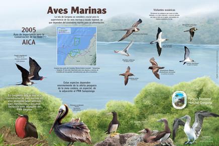 10-Infografia - aves marinas para la pagina web.jpg