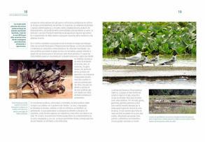 Aves acuaticas de Colombia final junio baja _Página_10.jpg