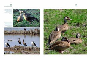 Aves acuaticas de Colombia final junio baja _Página_20.jpg