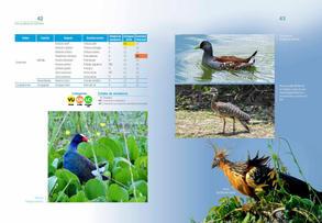 Aves acuaticas de Colombia final junio baja _Página_22.jpg