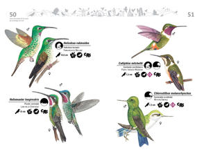 Libro de aves de Cali26.jpg