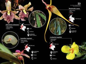 Guia de orquideas del Danubio12.jpg