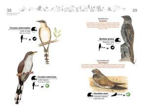 Libro de aves de Cali20.jpg
