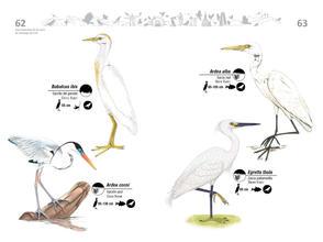 Libro de aves de Cali32.jpg