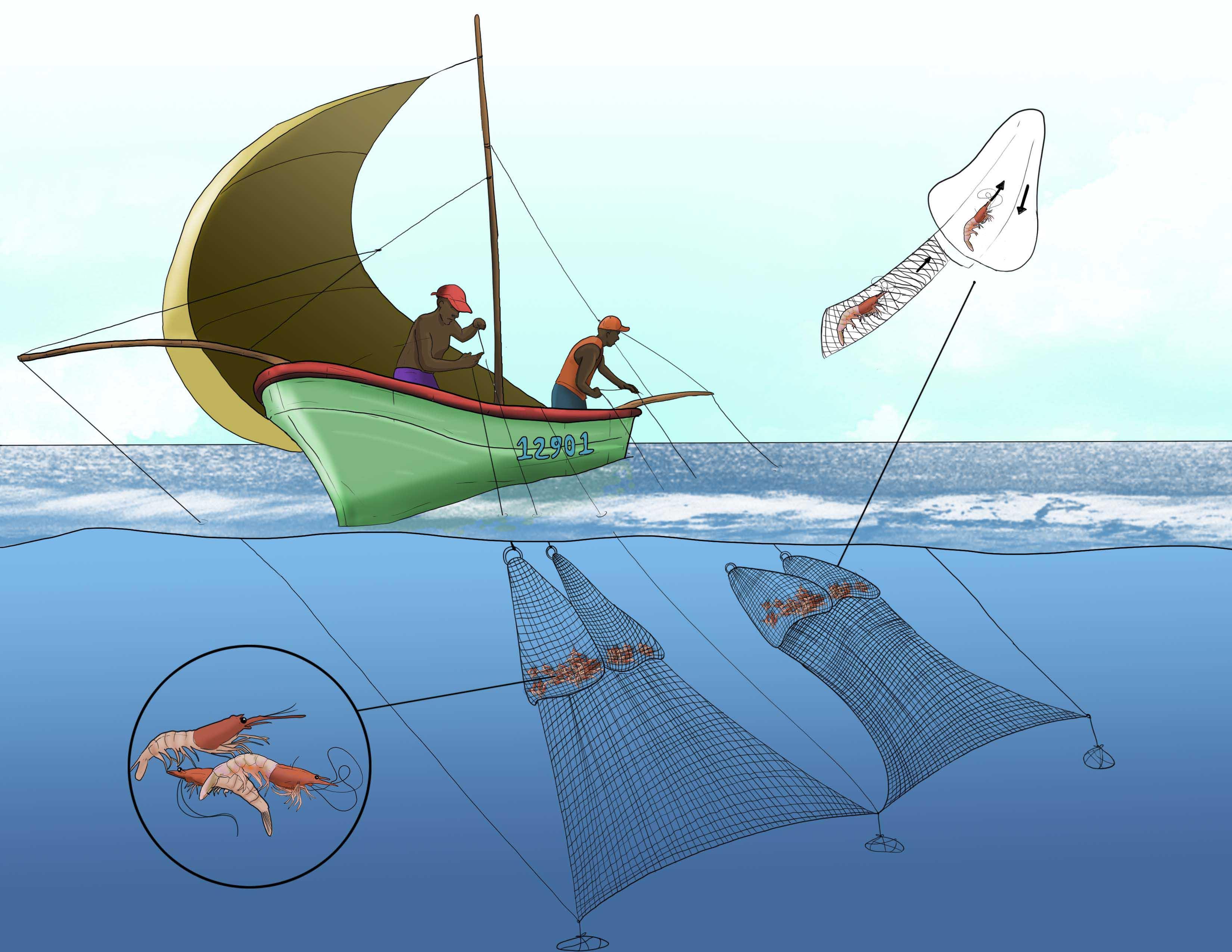 ilustracion18
