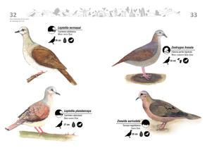 Libro de aves de Cali17.jpg