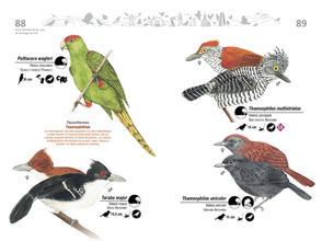 Libro de aves de Cali45.jpg