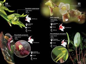 Guia de orquideas del Danubio18.jpg