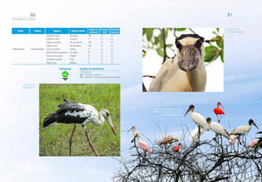 Aves acuaticas de Colombia final junio baja _Página_26.jpg